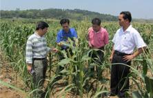 农化服务跟不上 缺少专业指导